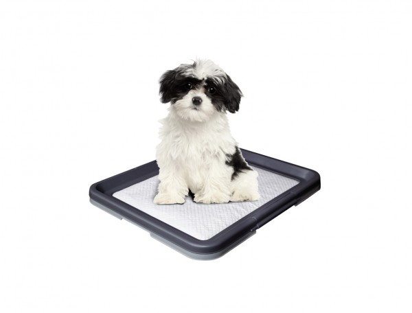 nobby-doggy-trainer-pads